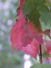 日, 2012-09-16 12:57 - Lenape Trail