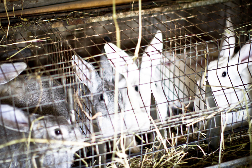 farm rabbits in Basilicata, Italy2