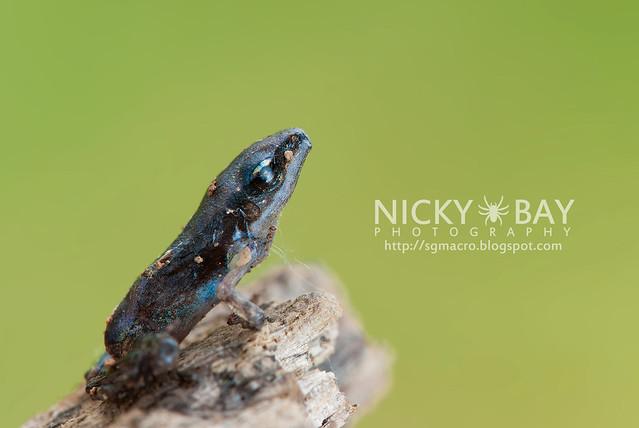 Frog - DSC_6166