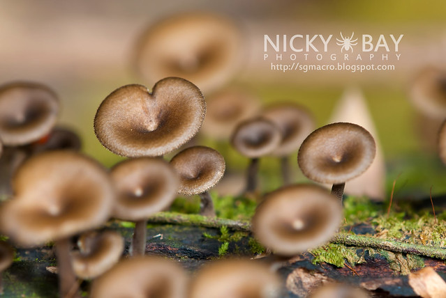 Mushrooms - DSC_6256