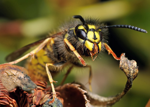 Wasp by Andy Pritchard - Barrowford