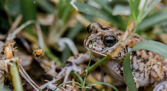 Mr Frogdude 2