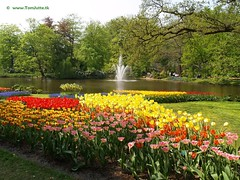 Dutch Tulips, Keukenhof Gardens, Holland - 0682