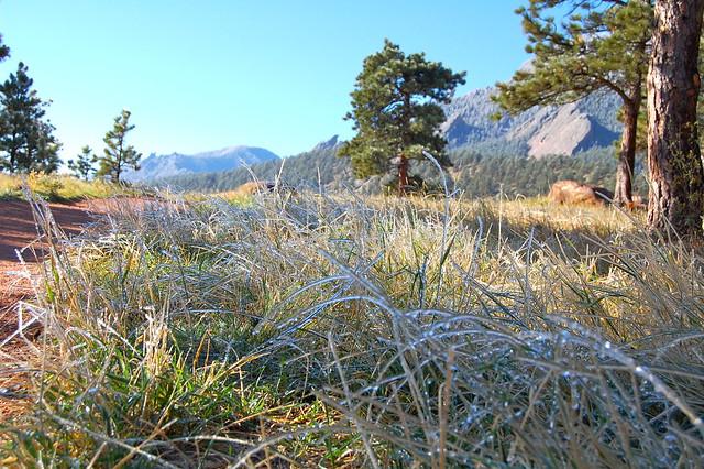 Frozen Grass - Hiking at NCAR, Boulder, CO