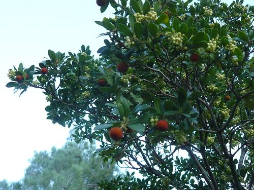 les anciens  fruits et les nouvelles fleurs
