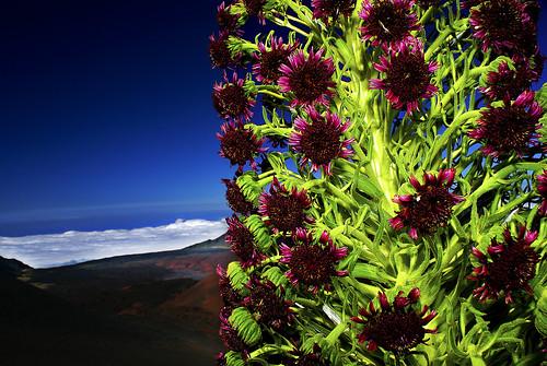 life sky mountain plant color nature landscape volcano hawaii maui haleakala endemic