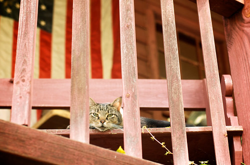 Porch cat.