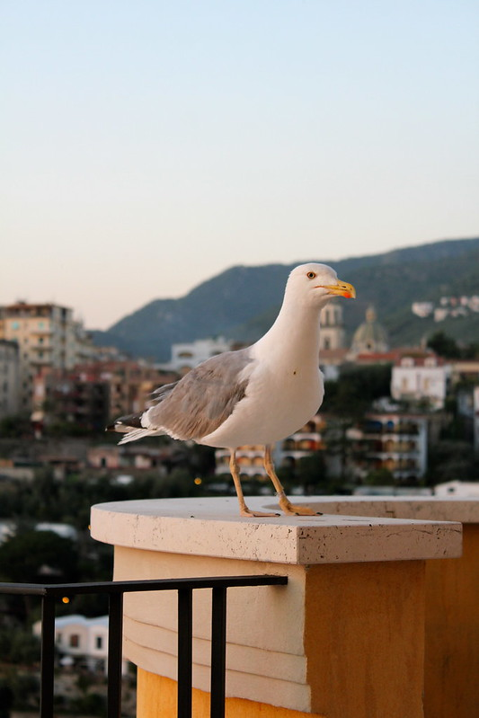 Seagull at L'Accanto