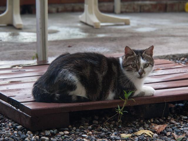 Cat at Kilim Hotel