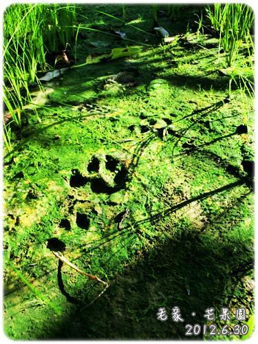 120630-酷馬的足跡