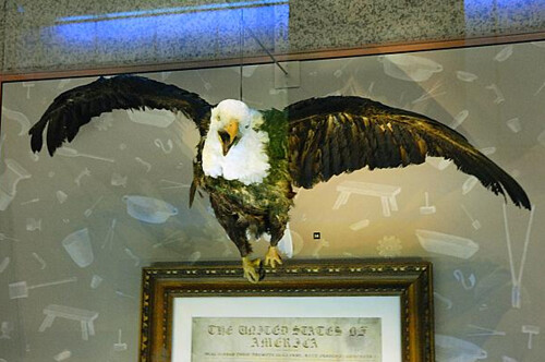 US Mint Peter the Eagle
