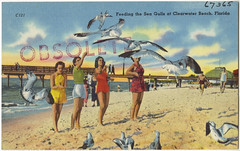 Feeding the sea gulls at Clearwater Beach, Florida