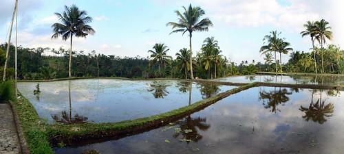 bali water indonesia nikon rice ubud ablation sigma18200 d7000 lucaabbate risefiels