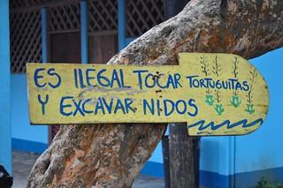 ¡ Prohibido tocar a las tortuguitas ! Tortuguero - 7950159796 e6ee06c7d8 n - Tortuguero, entre la tranquilidad y la vida salvaje
