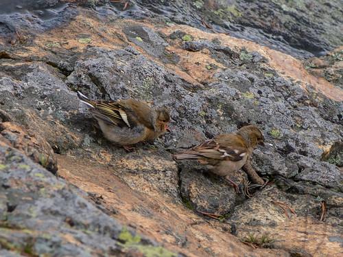 summer nature sparrow pvanhala