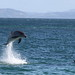 Dolphin Visit to Tiri