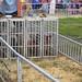 AACO-Fair-2012 - 03