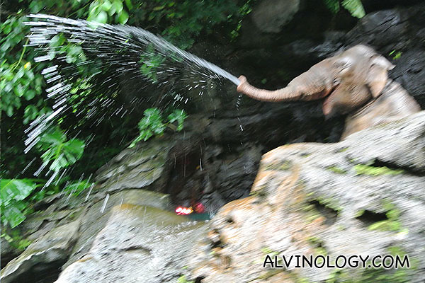 One of the elephant squinted water at everyone
