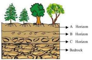 Ncert solutions for class 7 science chapter 9 soil for Soil 7th class