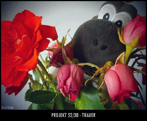 Projekt 52/38 - Trauer