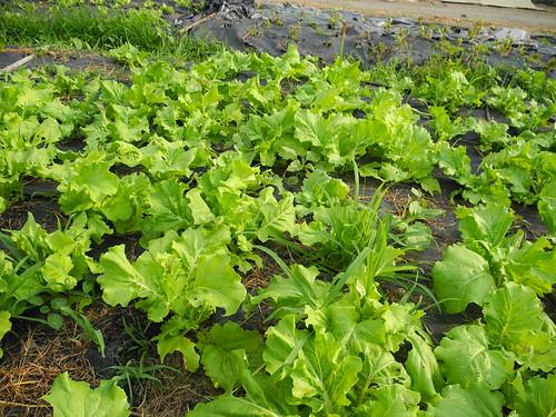 主婦聯盟消費合作社自1996年即推動減硝酸鹽,契作農友以合理或不施肥的方式種植,減少葉菜病蟲害,產量也未減少。