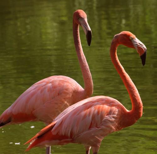 Look of Pink Love