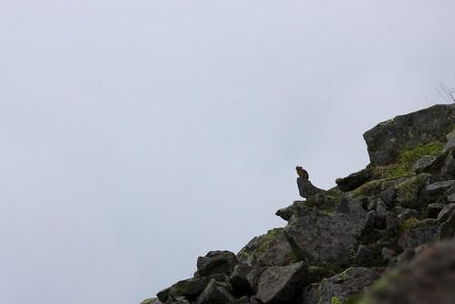 空を仰ぐ高山の哲学者