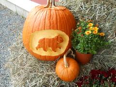 BearsCarvedPumpkin by Lyme Nursery