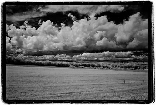 trees field clouds landscape ir maine 2012 rollei400ir