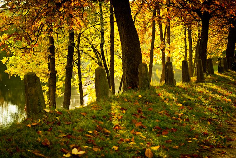 Lovely colors . люблю осенний свет!  DSC_0550