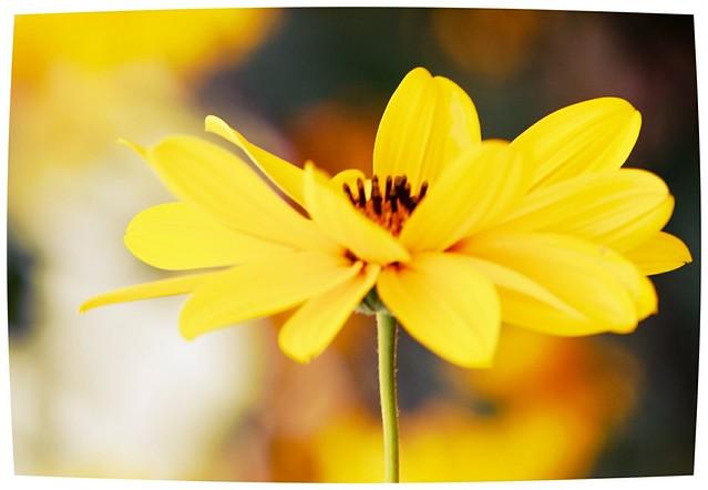 *_yellow
