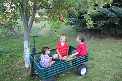 Three kids in a wagon 11