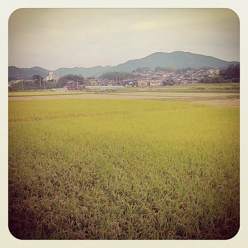 おこめ / paddy fields