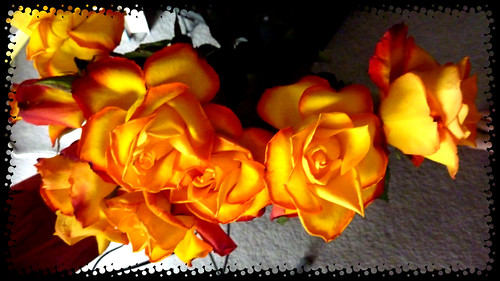 Roses from my son width=