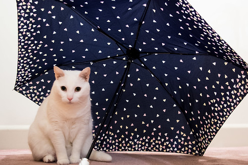 Snowflake under an umbrella