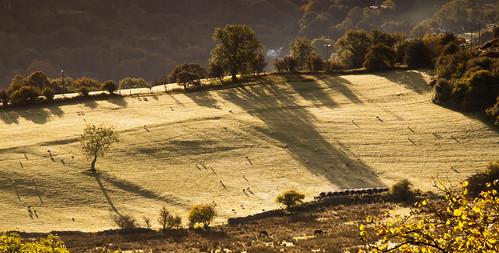 mountain tree wales sunrise countryside shadows sheep fields