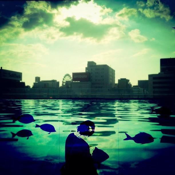 オアシスを泳ぐ魚達