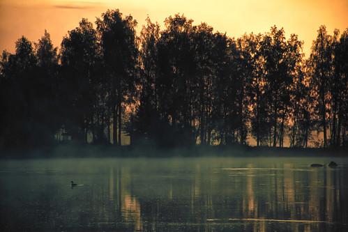 bird nature birds sunrise suomi finland landscape auringonlasku pirkanmaa mattiollikainen mazahito morningscubamoment