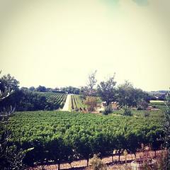 Vignobles de Languedoc