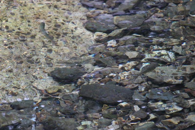 龍泉洞外の川