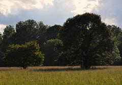 Little Tree Big Tree
