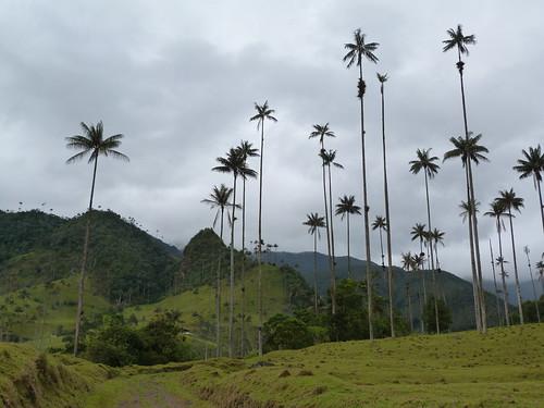 Imagen del Valle de Cocora, en Colombia