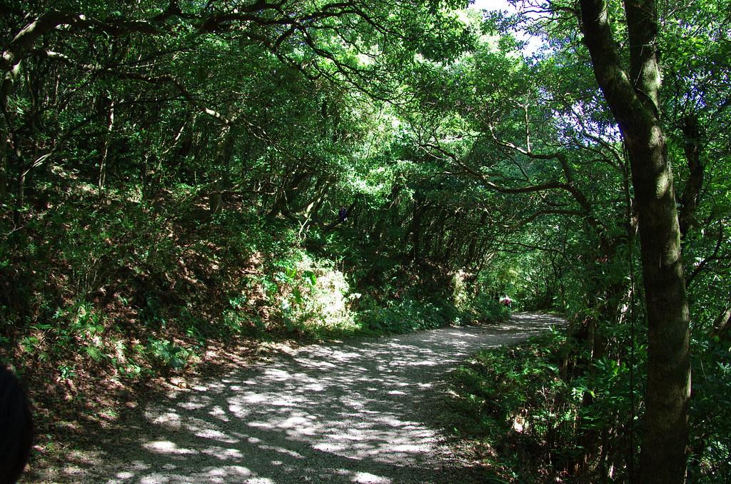 二子坪步道,綠意