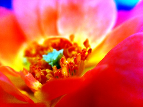 I'm in the flower garden with my camera. It's what I do to stay (somewhat) sane. #macro