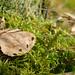 Moss De Kelder mashup item