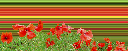 [フリー画像素材] 花・植物, ヒナゲシ ID:201209230400