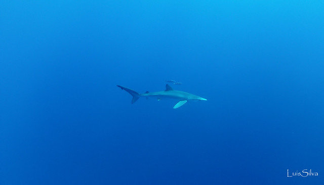 Diving Azores