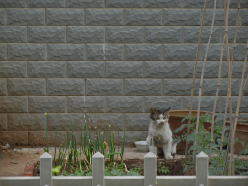 Cats in Shenyang, China _ 0259