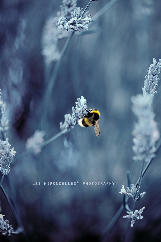Amazing nature photography by Laura Esse