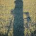 Mt Vernon Trail Morning 3 by Tony DeFilippo